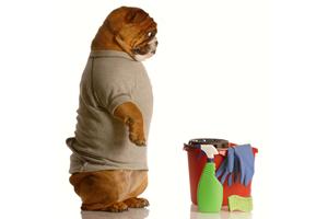 Pet Friendly Environment – Part 1