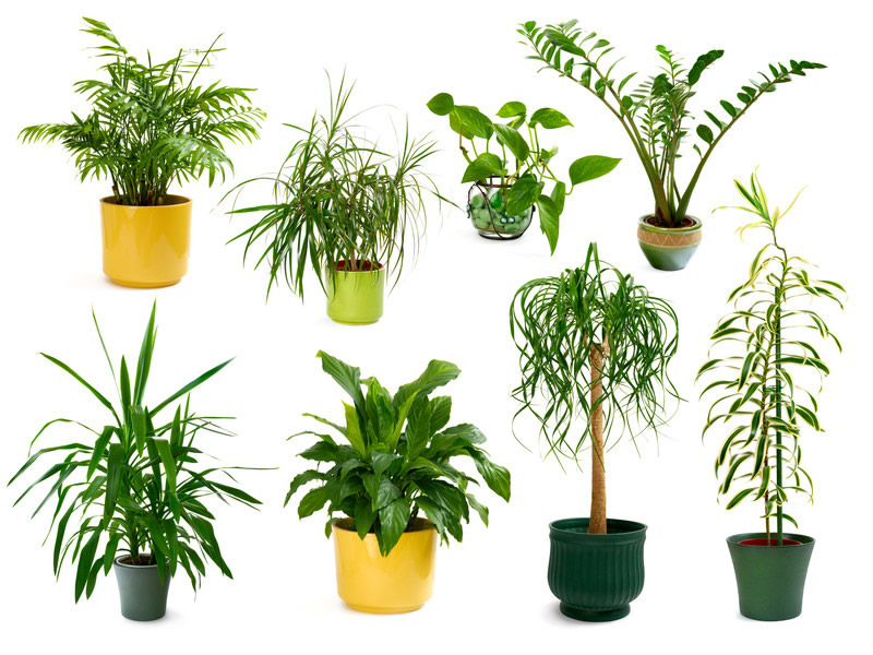 What Kind of Plants Grow Well Inside Your Home or Office
