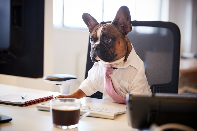 How to Clean Offices that Allow Dogs and Cats