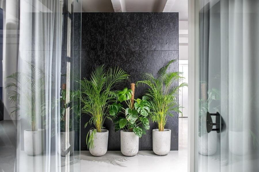 How Do Plants Enrich an Office Environment?