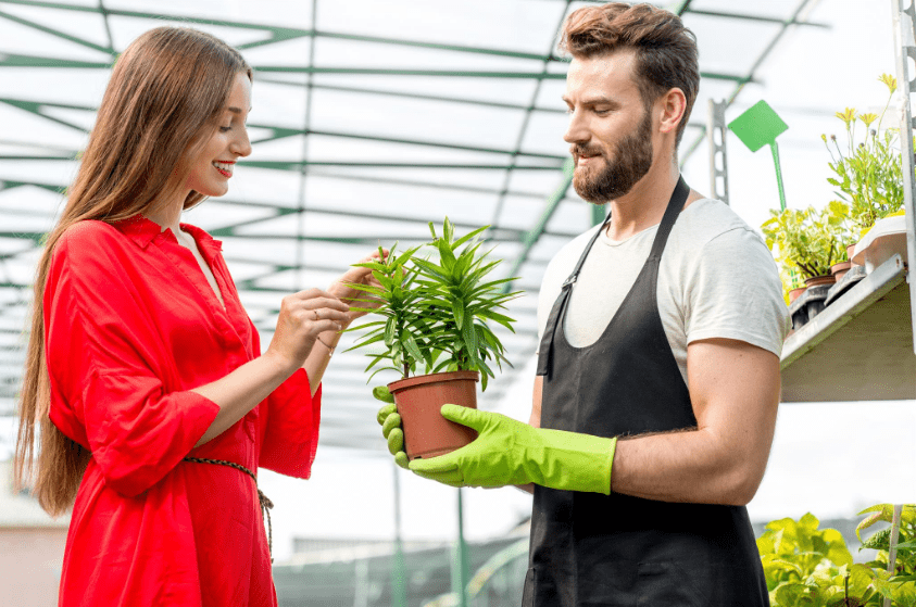 l3 Plants That are Popular and Appropriate for an Office